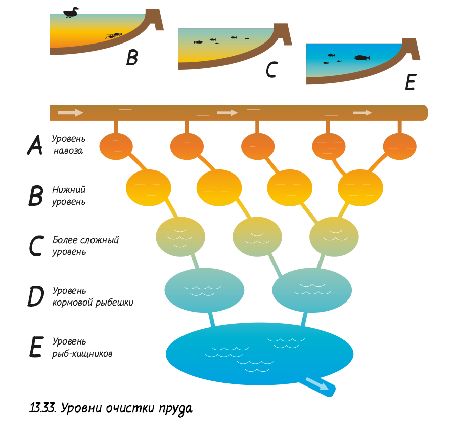 Очистка пруда происходит поэтапно, от планктона до участия хищных рыб.